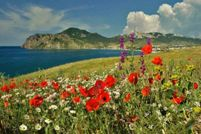 Погода в Крыму в июле: яркое солнце, спокойное море