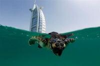 Готелі Арабських Еміратів, Шарджа, Аджман5, 4 і 3 зірки на першій береговій ...