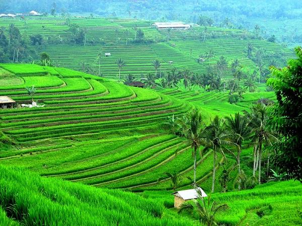 Остров Бали на карте мира - где это находится и как добраться? (сезон)