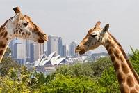 Які тварини живуть в Австраліїфото з назвами і описом