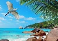 Летимо на Сейшельські островиназву і опис аеропортів прильоту