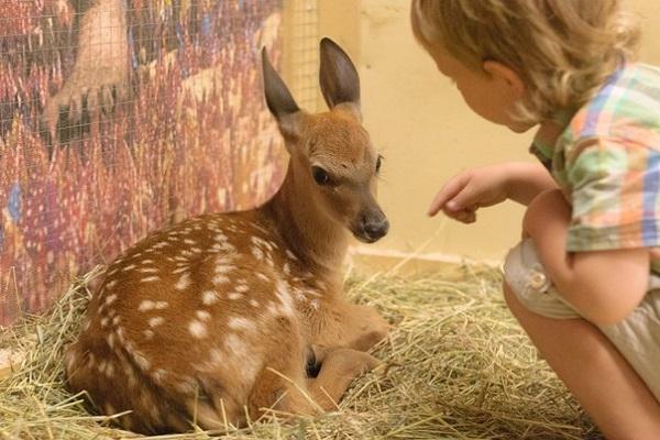 топ лучших мест для отдыха с ребенком в Минске - зоопарк