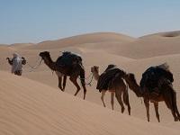 Тунис в январе: какая погода ожидает туристов?