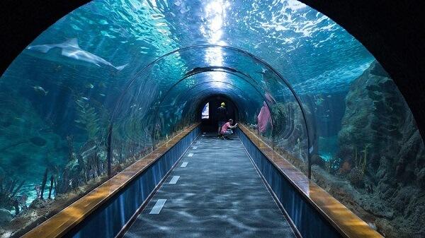 Москвариум - подводный центр в столице