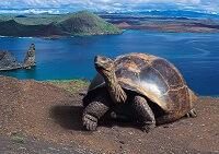 Удивительный мир Эквадора - где находятся Галапагосские острова?