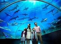 Красоты подводного мира на суше - самые большие океанариумы в мире