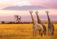 заповедники и национальные парки африки