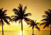 Достопримечательности солнечного Майами