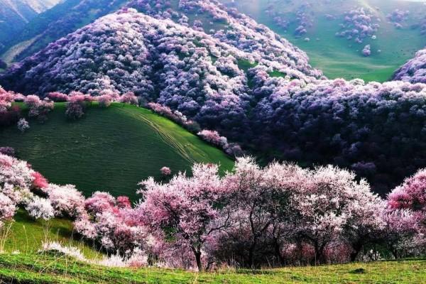 страна весной