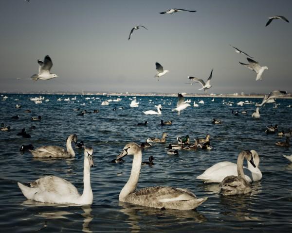 черноморские животные и птицы