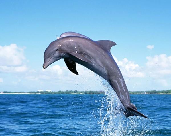 млекопитающие дельфины