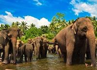 Погода на Шри-Ланке в мае - стоит ли отправляться в отпуск?