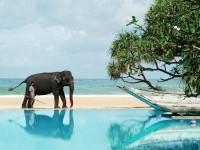 Шри-Ланка в июне