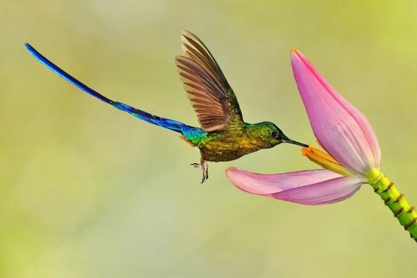 легенда о колибри