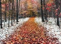 Переменчивая погода в Москве в ноябре
