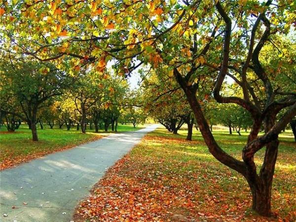 какой прогноз будет в начале осени в городе и области?