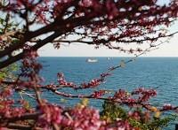 погода в марте в Абхазии