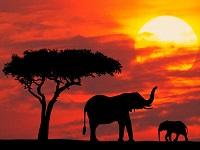 Диковинные достопримечательности Кении
