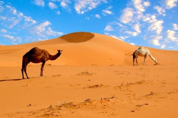 африканская Сахара